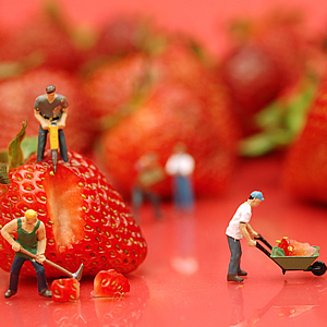Strawberry workers